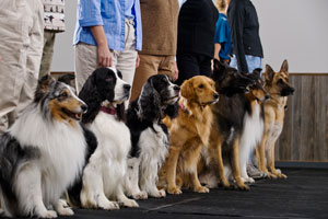 Finding-the-Right-Dog-Obedience-2