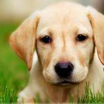 sweet-innocent-face-little-dog_194759