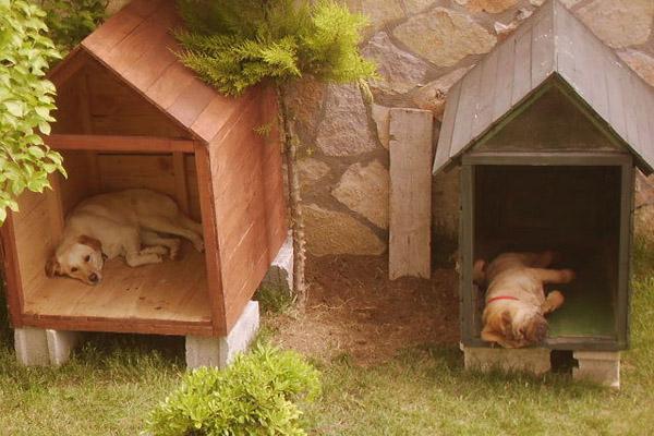 Şişli Köpek Oteli