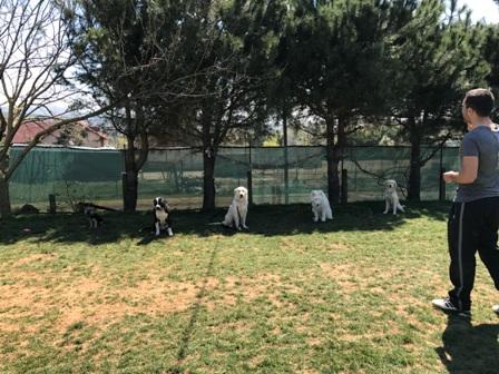 Köpek Pansiyonu Bayrampaşa Fiyatı