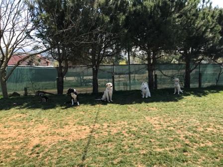Köpek Eğitimi Başakşehir Var Mı Nerede