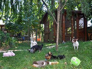 Kedi köpek pansiyon fiyatları